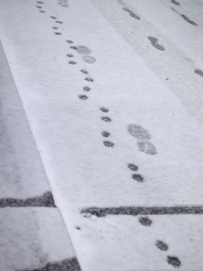 雪に付いた足跡 FYI00419301
