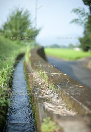 農業用水路 FYI00419528