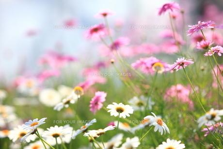 春のざわめき FYI00419813