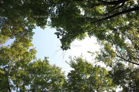 森の中のハート FYI00420084