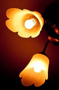 柔らかな光 FYI00420111