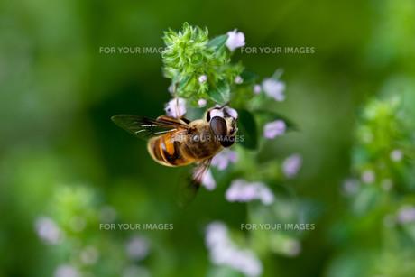 ハチ FYI00420119