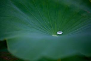 水滴と葉 FYI00420120