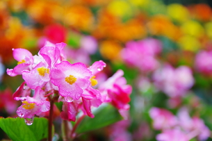 雨上がりの花 FYI00420121
