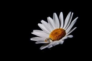 花と雫 FYI00420127