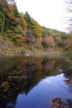 水面に映る紅葉 FYI00420141
