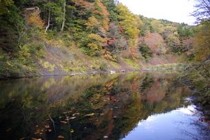 水面に映る紅葉 FYI00420145