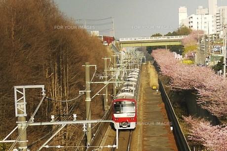 電車とさくら FYI00420281