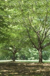 緑の木の素材 [FYI00420619]