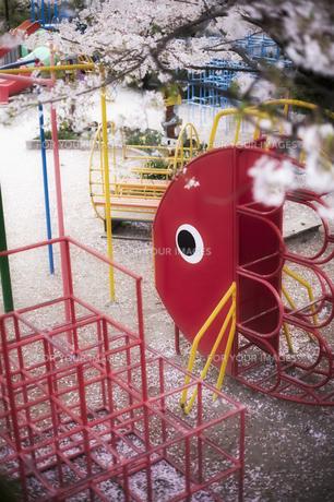 サクラの児童公園の素材 [FYI00420757]