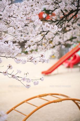 桜の街区公園の素材 [FYI00420800]