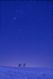 星空と親子の木 FYI00421013