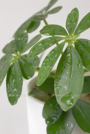 観葉植物・アップ FYI00421768