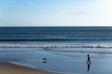 犬と散歩 FYI00422493