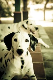 犬 FYI00422537