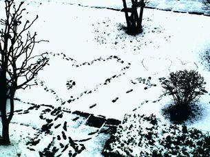 雪に足跡 FYI00423158