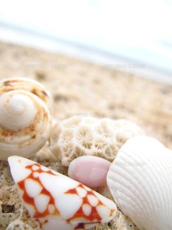 海辺の貝殻 FYI00423441