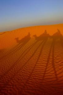 砂漠とラクダのシルエット FYI00423641
