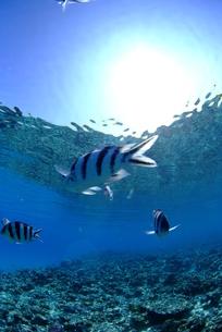浅瀬の魚の群れ FYI00423724