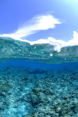 南国の半水面 FYI00423736