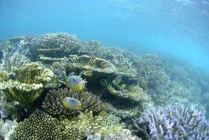 浅瀬の珊瑚礁 FYI00424035