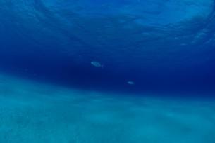 海底の白い砂地 FYI00424335