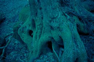 樹 FYI00424460