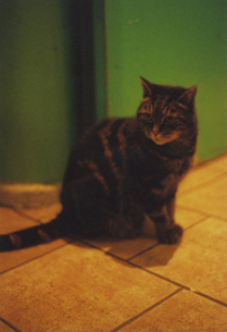 カラフルなパリの宿にいた子猫 FYI00429767