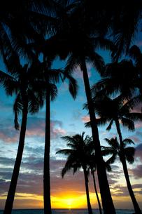 夕焼けとヤシの木 FYI00429886