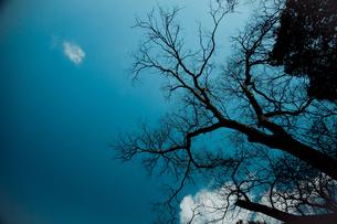 空に伸びる木の枝のシルエット FYI00429914