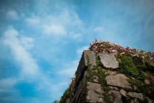お城の石垣 FYI00429922
