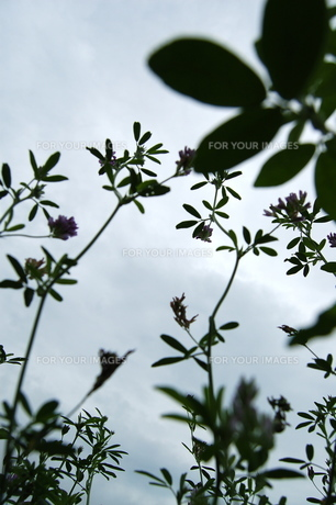 空と葉っぱ FYI00430256