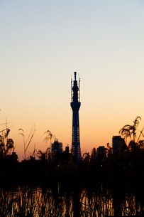 夕暮れの東京 FYI00430587