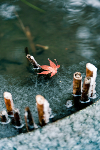 雪と紅葉 FYI00430599