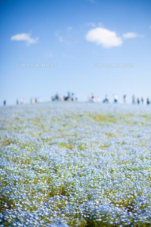 青い花と青い空 FYI00430663