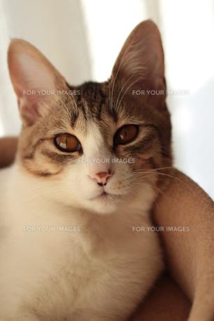 猫さん FYI00435279