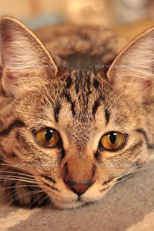 猫の目力 FYI00435387