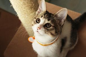 上を見る猫 FYI00435414