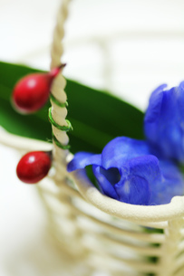白いかごとリンドウの花 FYI00436086