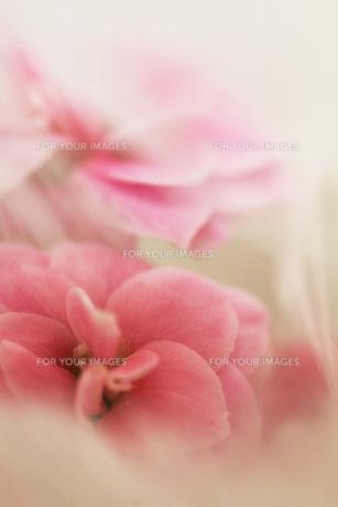 白い花とピンクの小花 FYI00436120