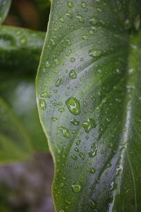 葉と雨 FYI00437610