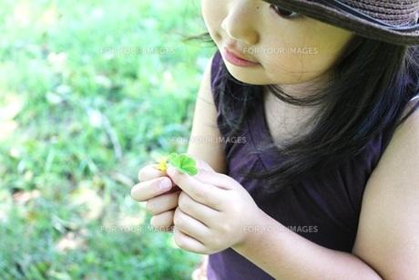 クローバーを持つ女の子 FYI00437728