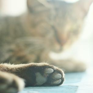 猫の肉球 FYI00439000