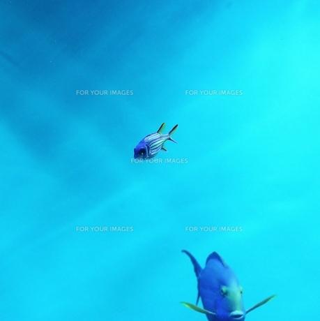 水族館の魚 FYI00439002
