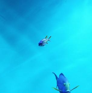 水族館の魚の素材 [FYI00439002]