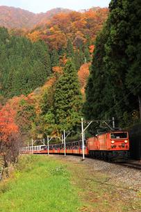 トロッコ列車 FYI00440727