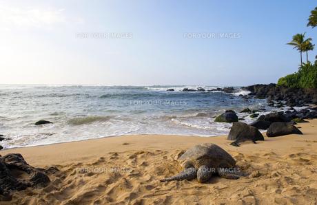 ウミガメのいる海岸-3 FYI00443609