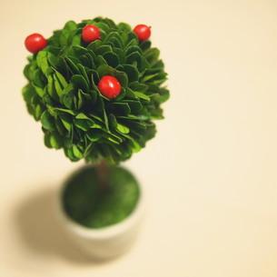 観葉植物 FYI00447587