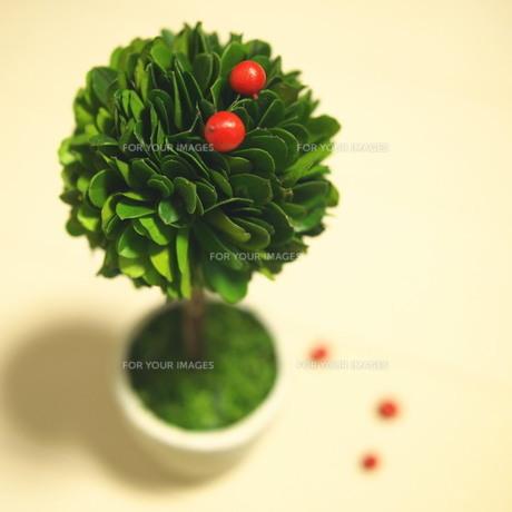 観葉植物 FYI00447593