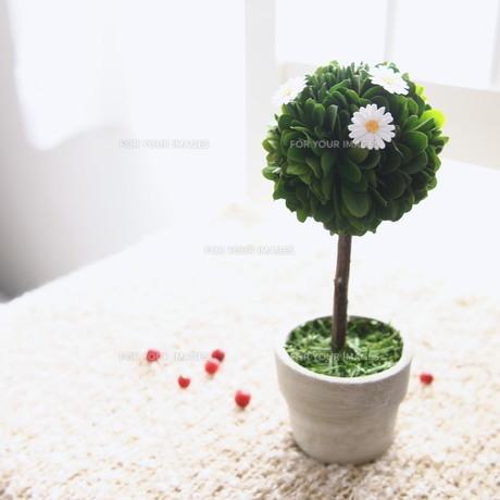 観葉植物と花 FYI00447603